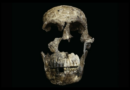 'Neo' discovered at the Cradle of Humankind.