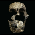 'Neo' discovered at the Cradle of Humankind - Hear The Facts!